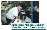 Duchess going under for medical procedure
